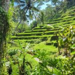 Raj just returned from enjoying a month in Bali - beach, food, and healing.  Read about some of his stories, tips, and recommendations for exploring Bali.