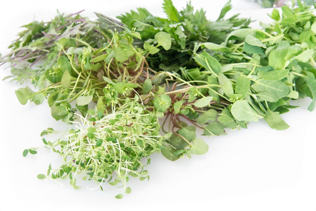 Foraged Plants: Stinging Nettle, Lambs Quarter, Miners Lettuce, Sprouts